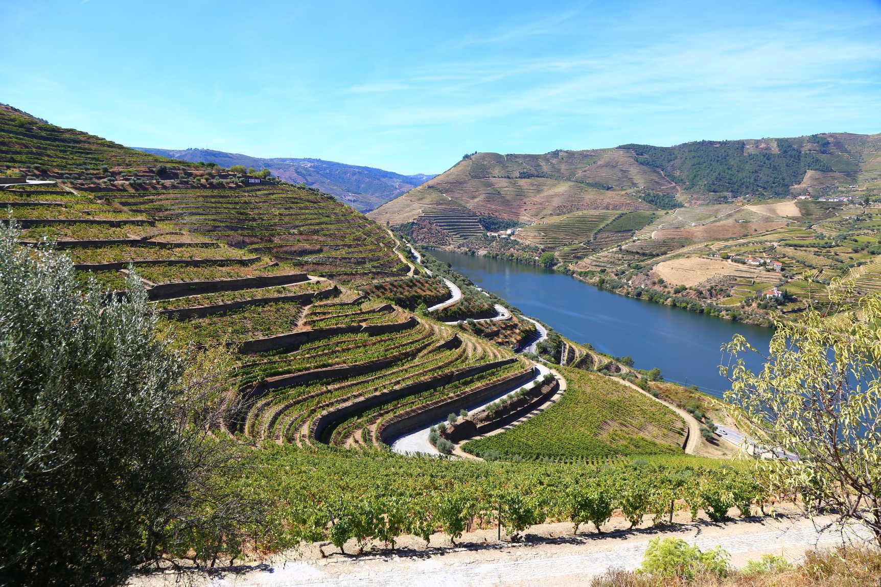 Douro Grape Harvest